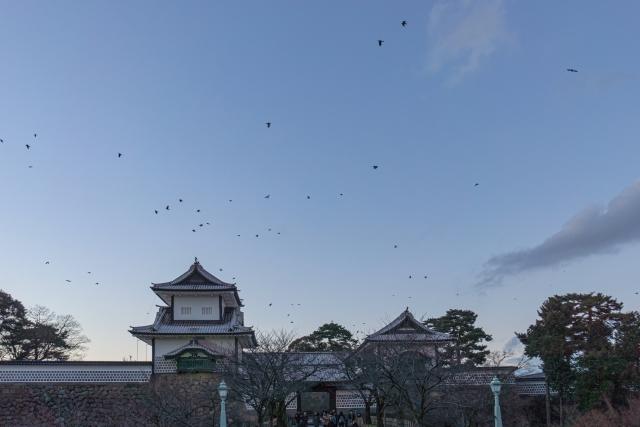 AGA無料カウンセリングを石川で探すならこのAGAクリニック!オンラインカウンセリングも紹介!